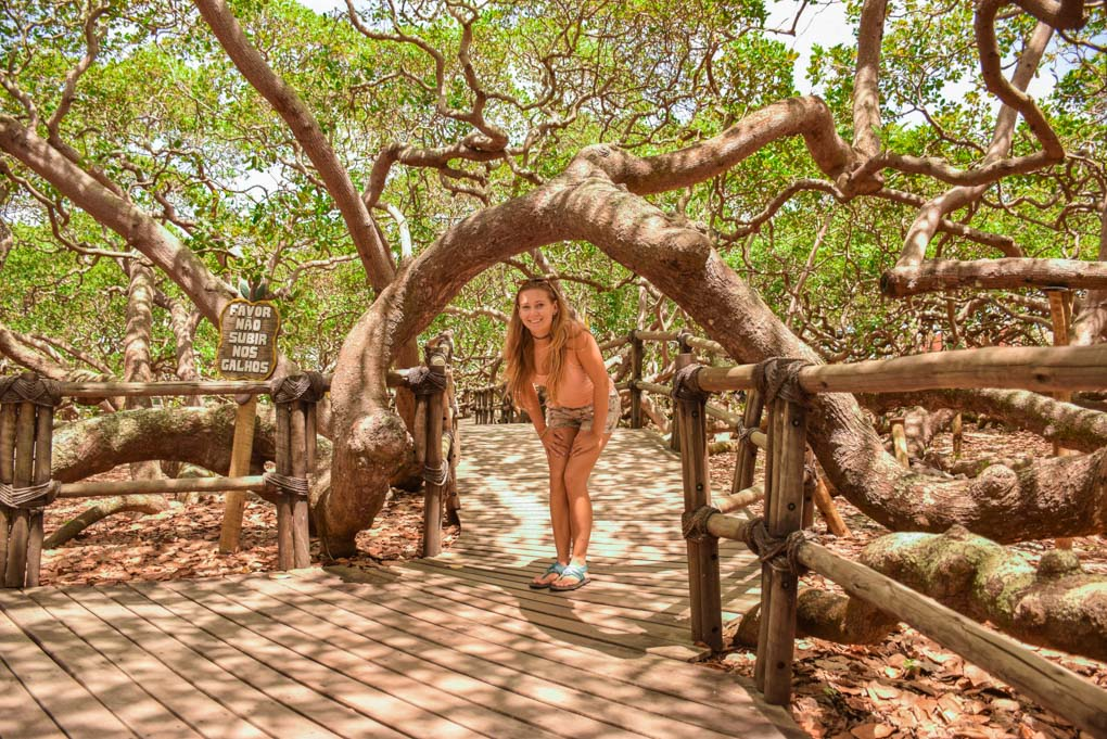 Bailey stands under the the worlds largest cashew tree called Cajueiro de Pirangi near Natal, Brazil