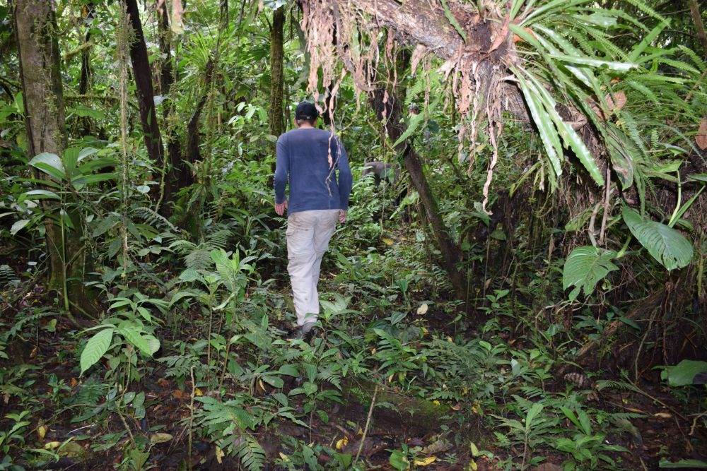 exploring the PEruvian jungle