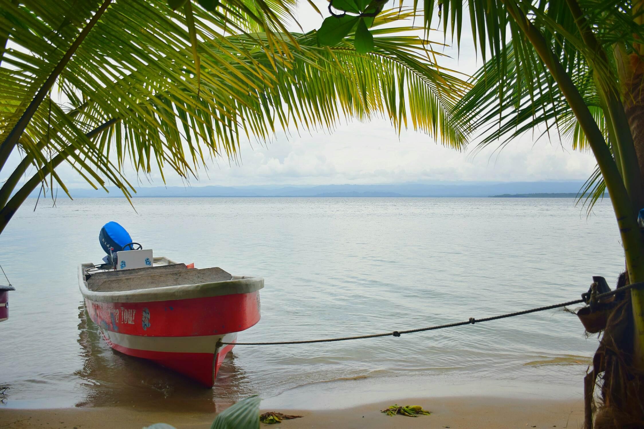 Starfish beach Bocas del Toro dolphins
