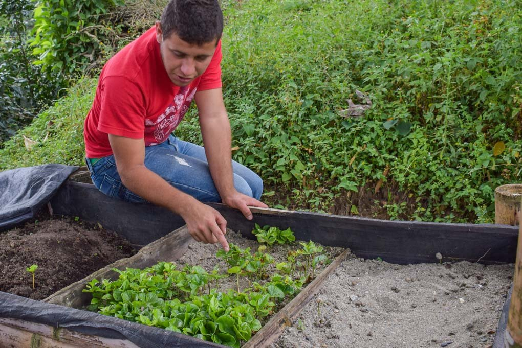 A man looks at small coffee plants before planting them in Ataco, El Salvador