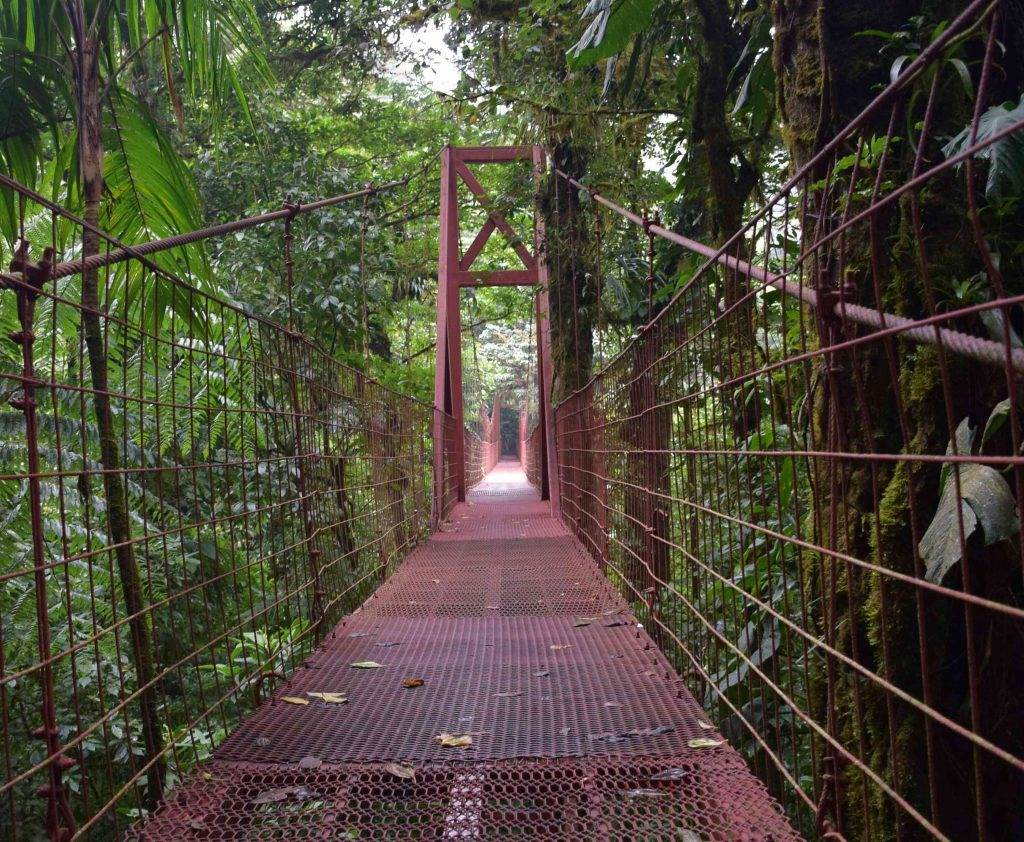 The hanging bridge in the Monteverde cloud forest