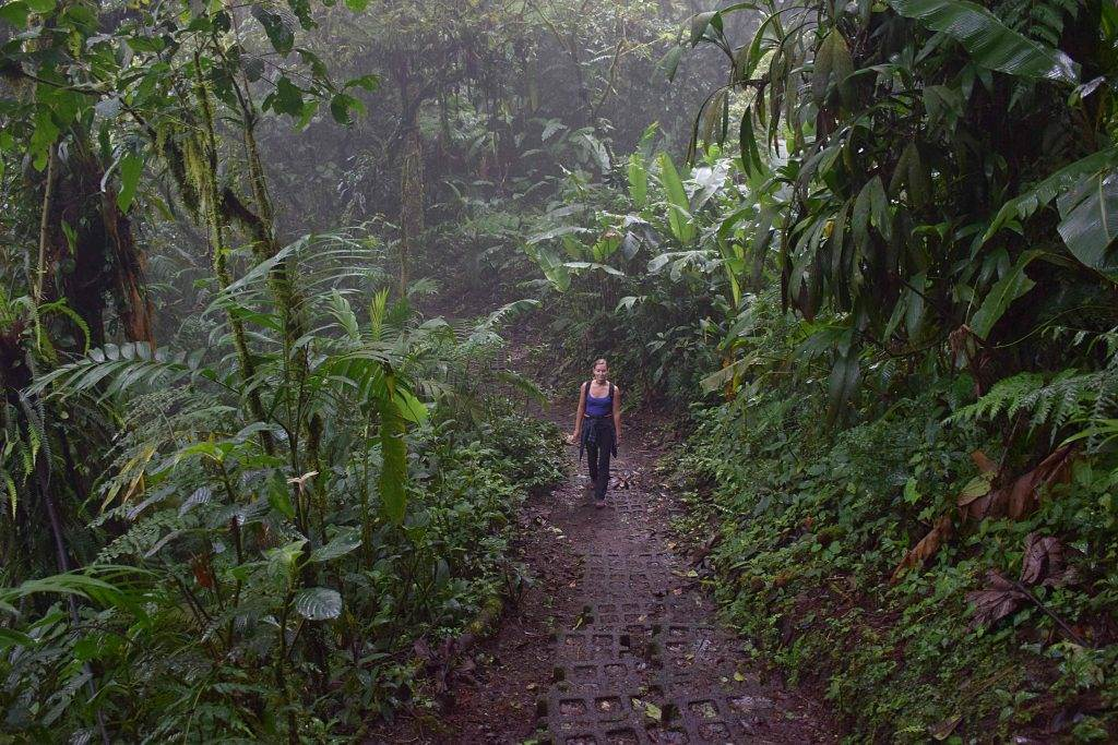 Visit the monteverde cloud forest