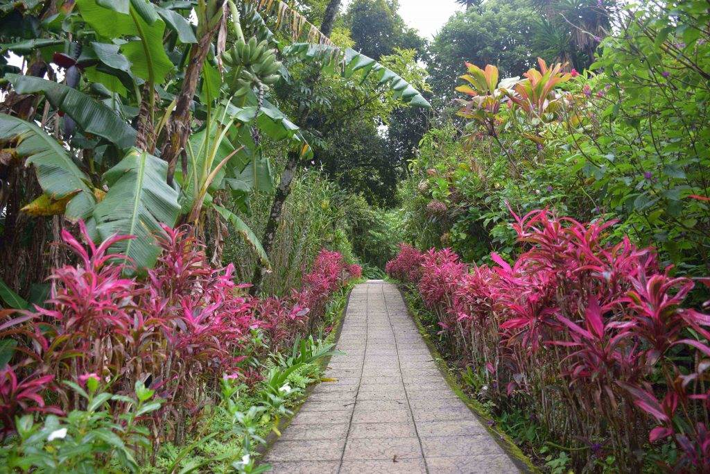 hotels in monteverde