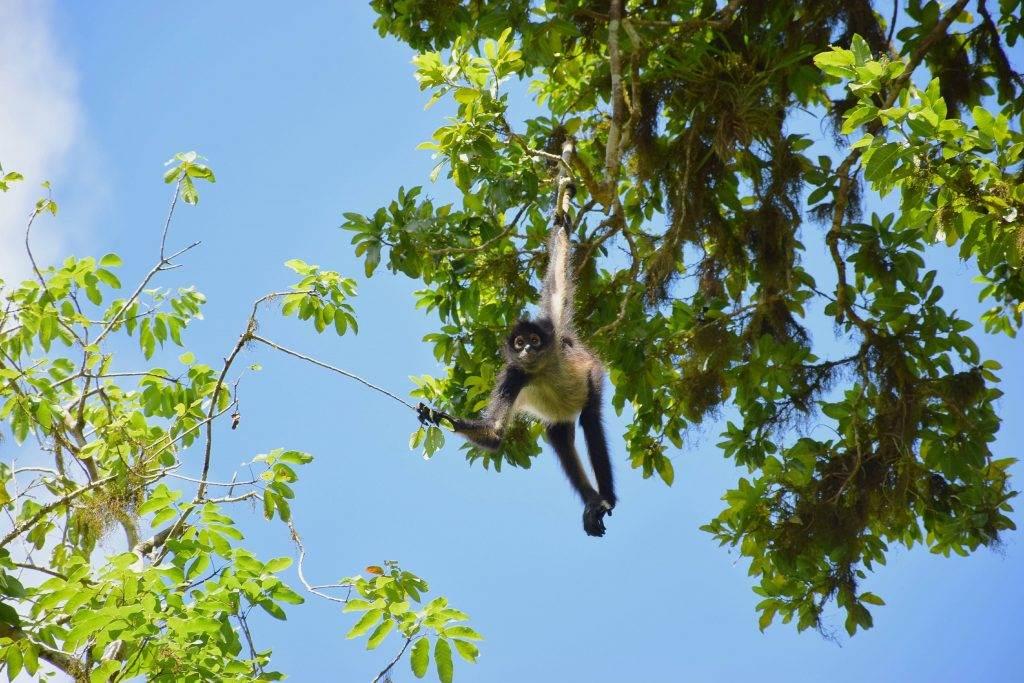 wildlife at tikal national park