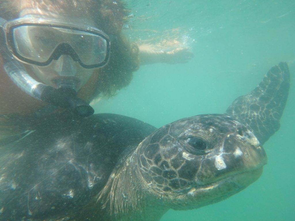 mancora sea turtles