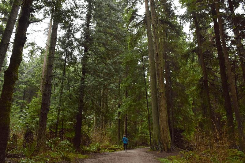Exploring Stanley park in Vancouver