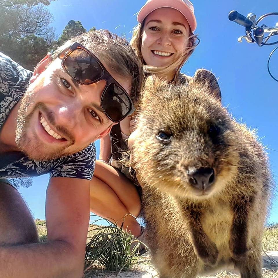 quokka on rottnest island day trip