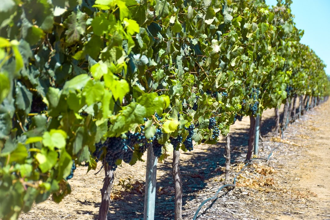 Drink wines on one of our day trips from Perth
