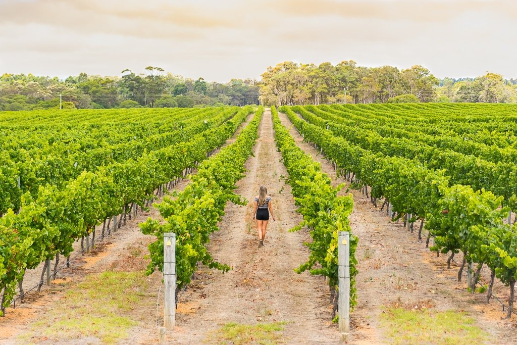 Visiting a winery on a day trips from Perth