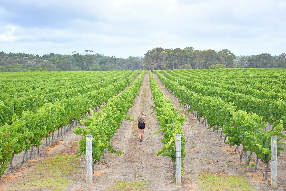 a wine tour is one of the best things to do in margaret river