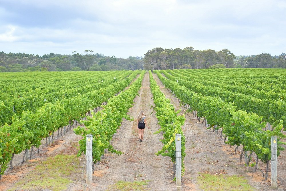 Margaret River Wine Tour: Know Before You Go