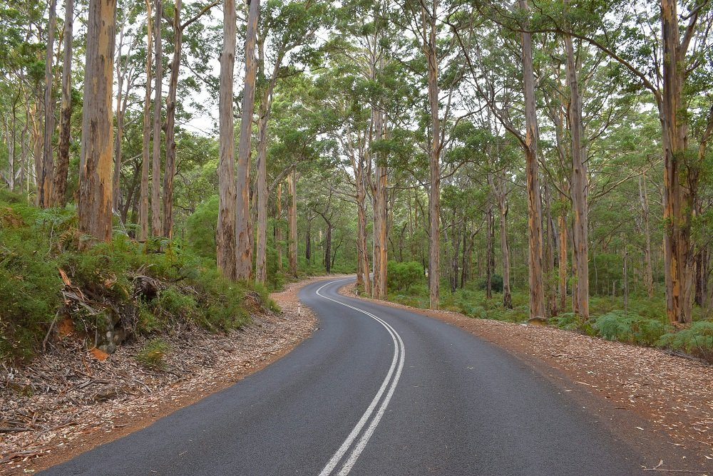 the forests of margaret river