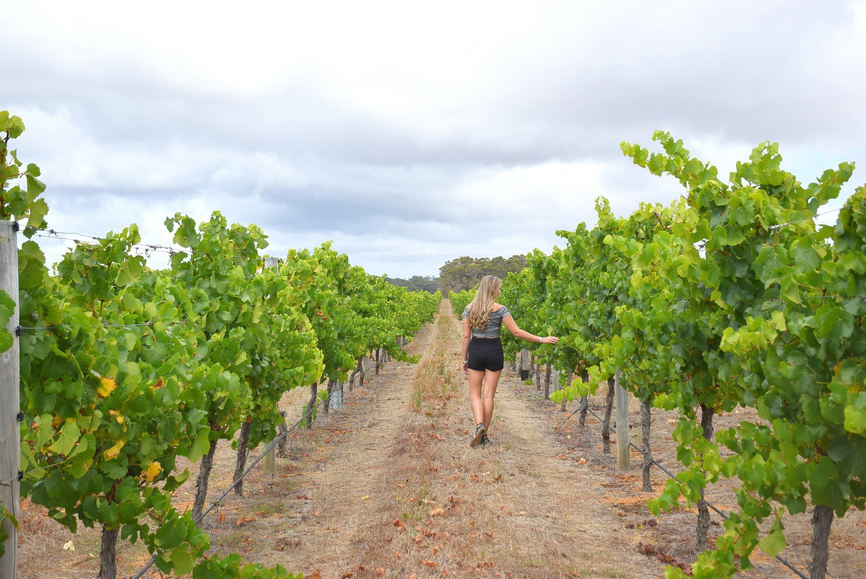 Margaret river wine tour