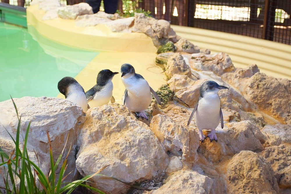 penguin island in perth
