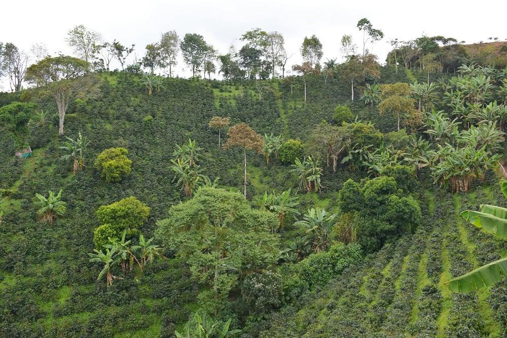 the coffee farm in salento