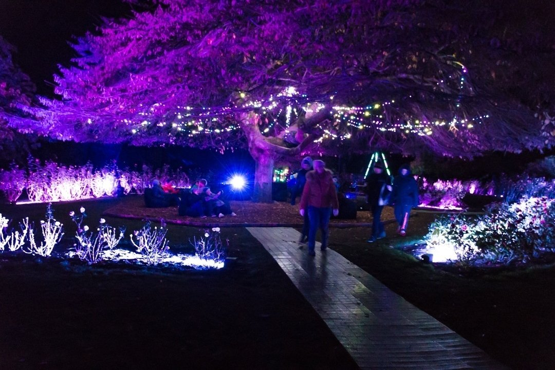 light festival in queenstown