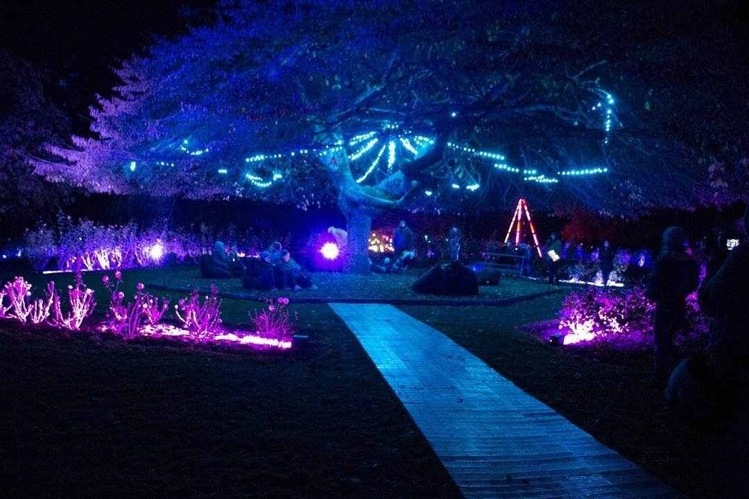 LUMA Queenstown Light Festival: Review and Visitor Info