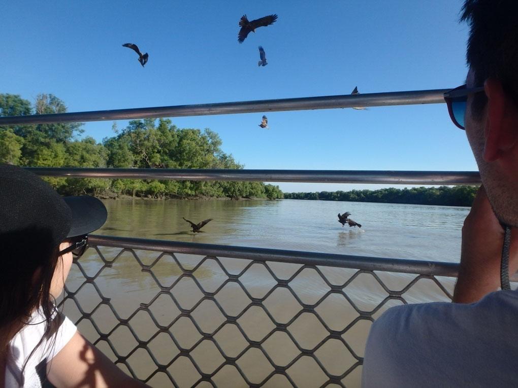The Bird Show on the jumping crocodiles