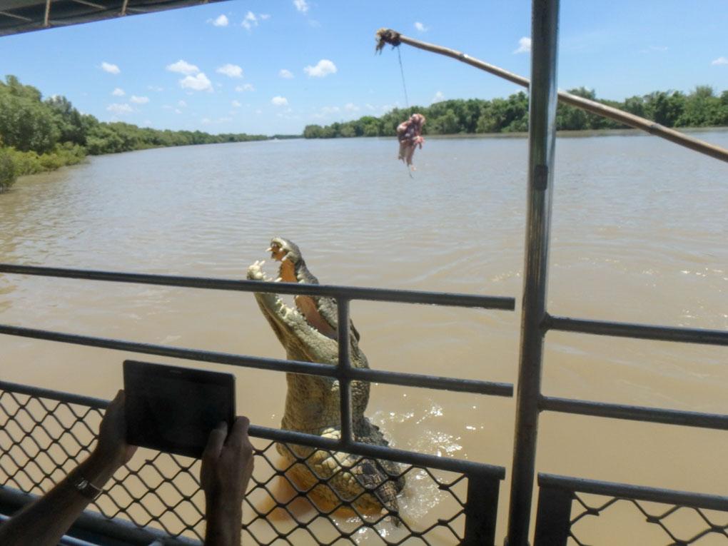 Darwing Jumping Crocodiles