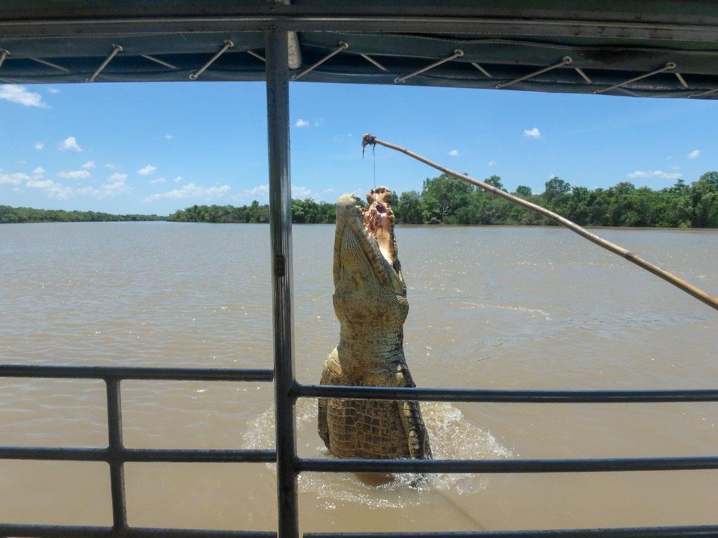 Adelaide River Jumping Crocs in Darwin, Australia