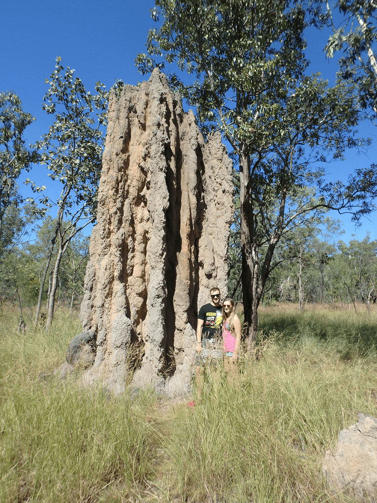 termite mounds in darwin