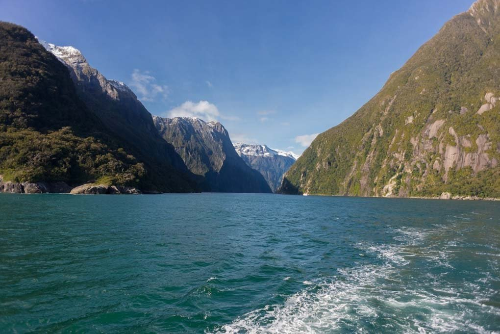 Looking out the back of a boat on a Milford Sound Cruise