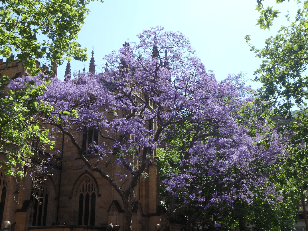 beautiful churches in sydney