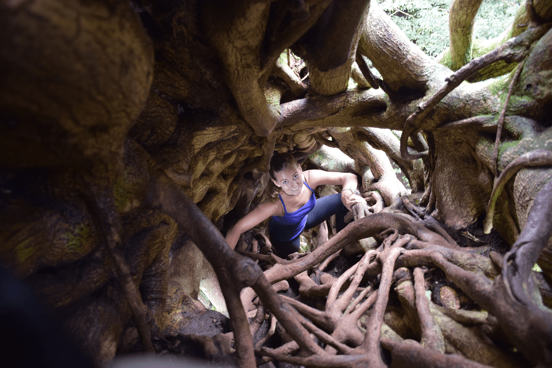 climbing in the ficus tree costa rica