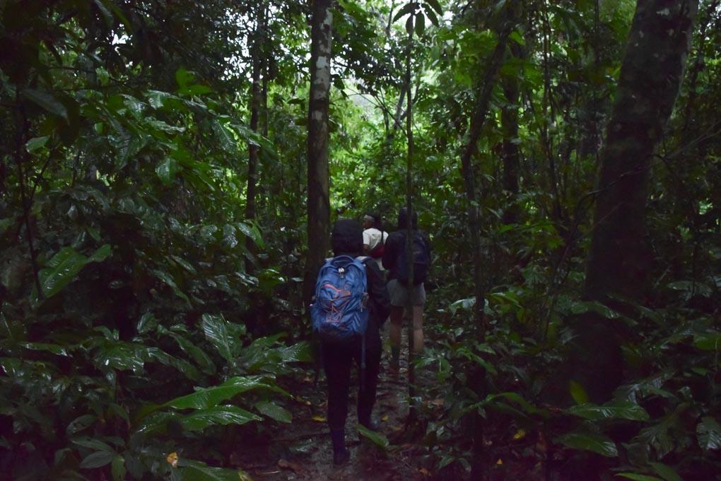 Walking through the Puerto Maldonado amazon