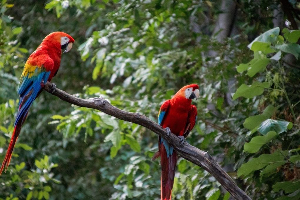 Macaw clay lick, Puerto Maldonado