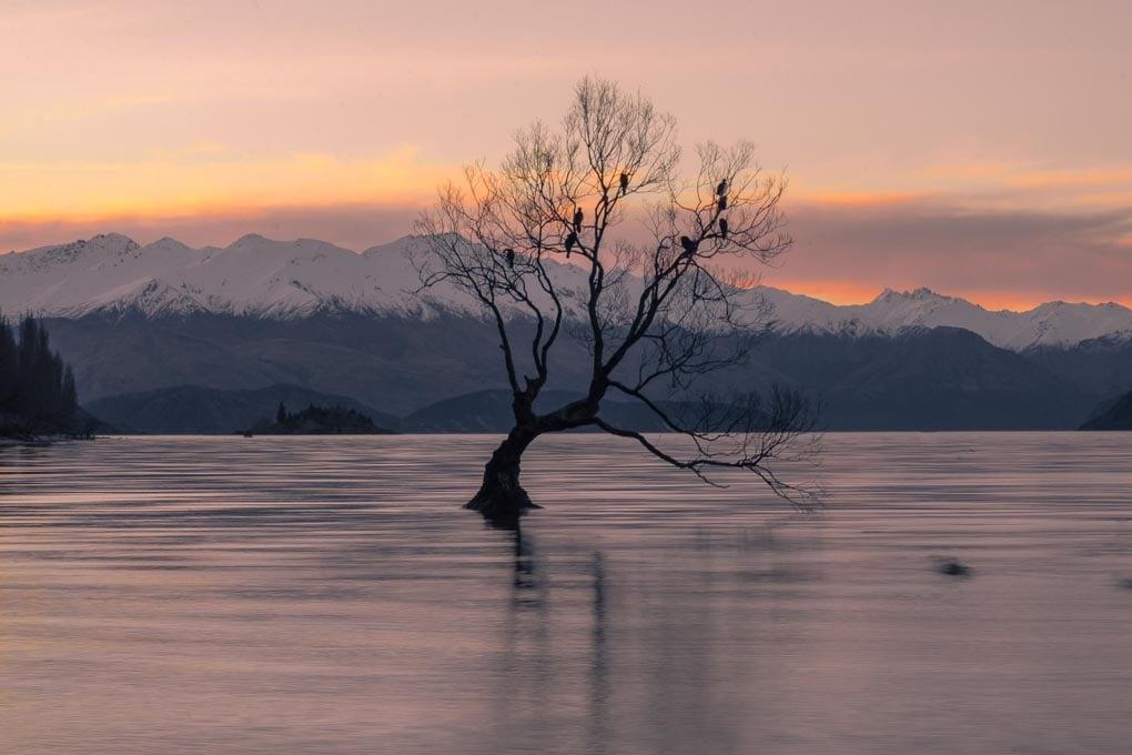 The Wanaka Tree after sunset