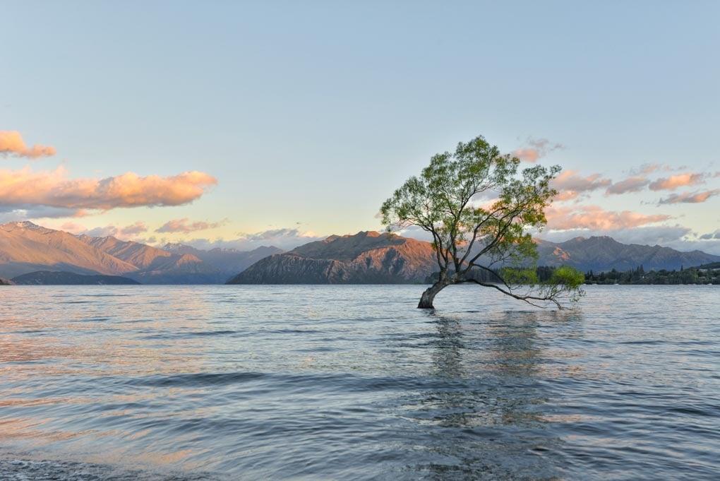 The Wanaka Tree in Wanaka, New Zealand at sunset
