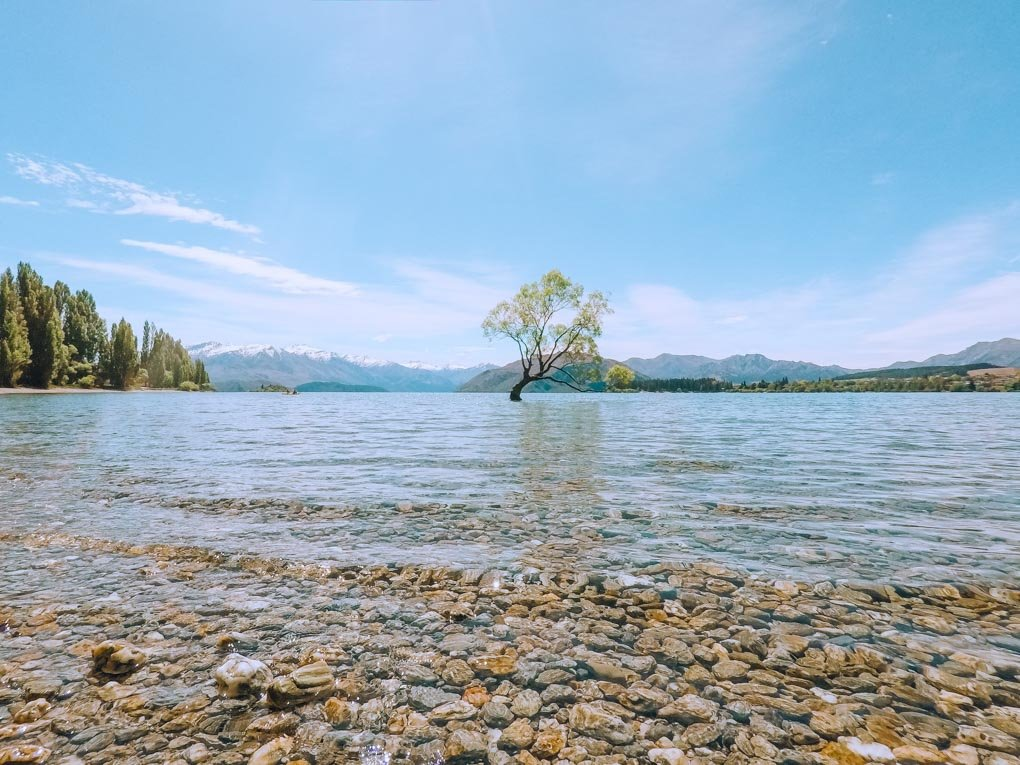 The Wanaka Tree on a sunny day taken from the rocky shores of Lake Wanaka