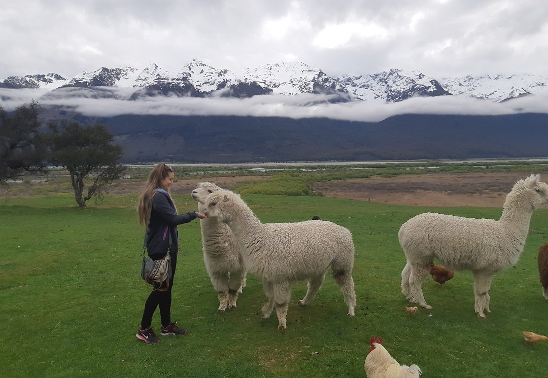 The Glenorchy Animal Experience