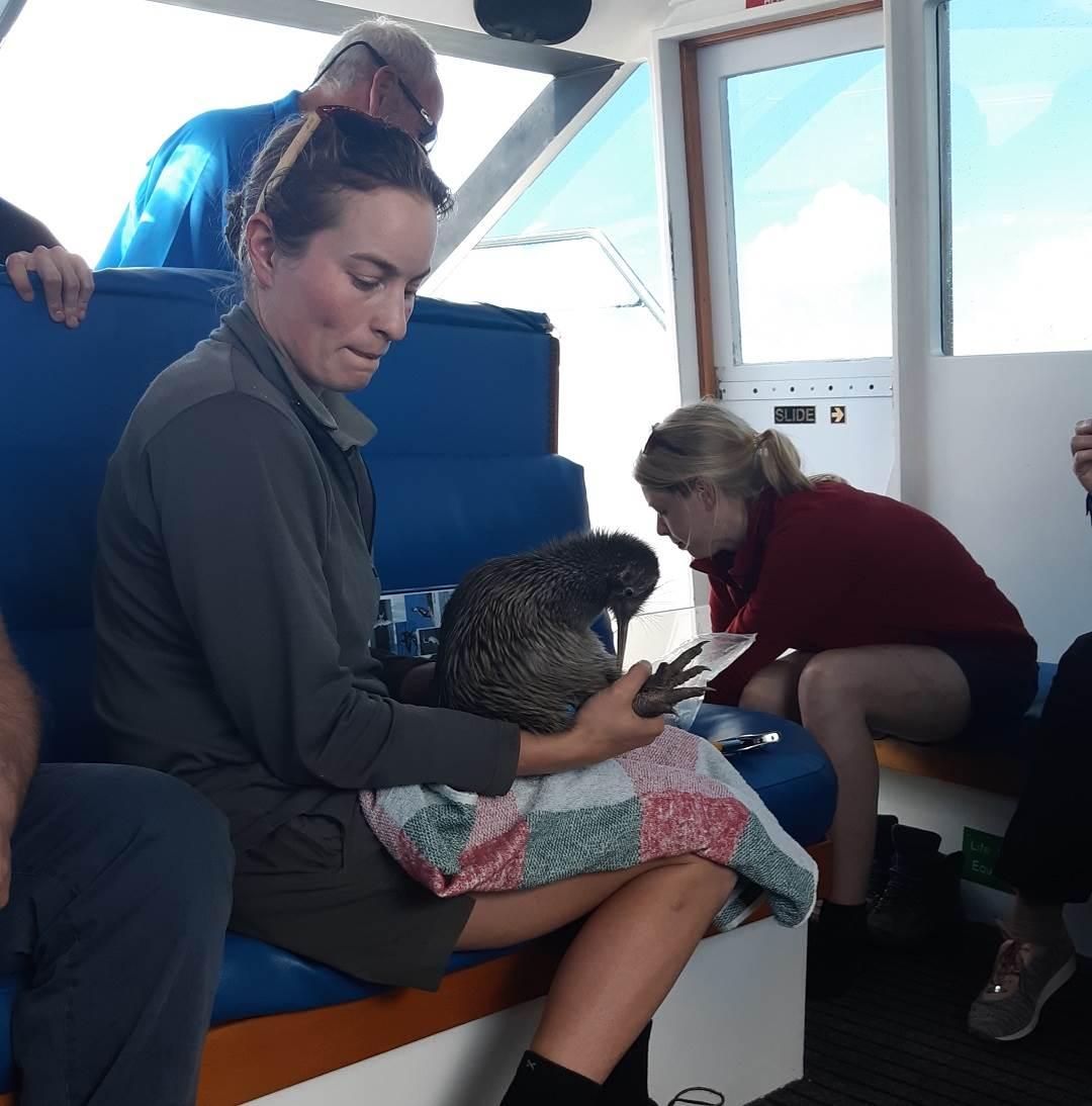 doc tagging a kiwi