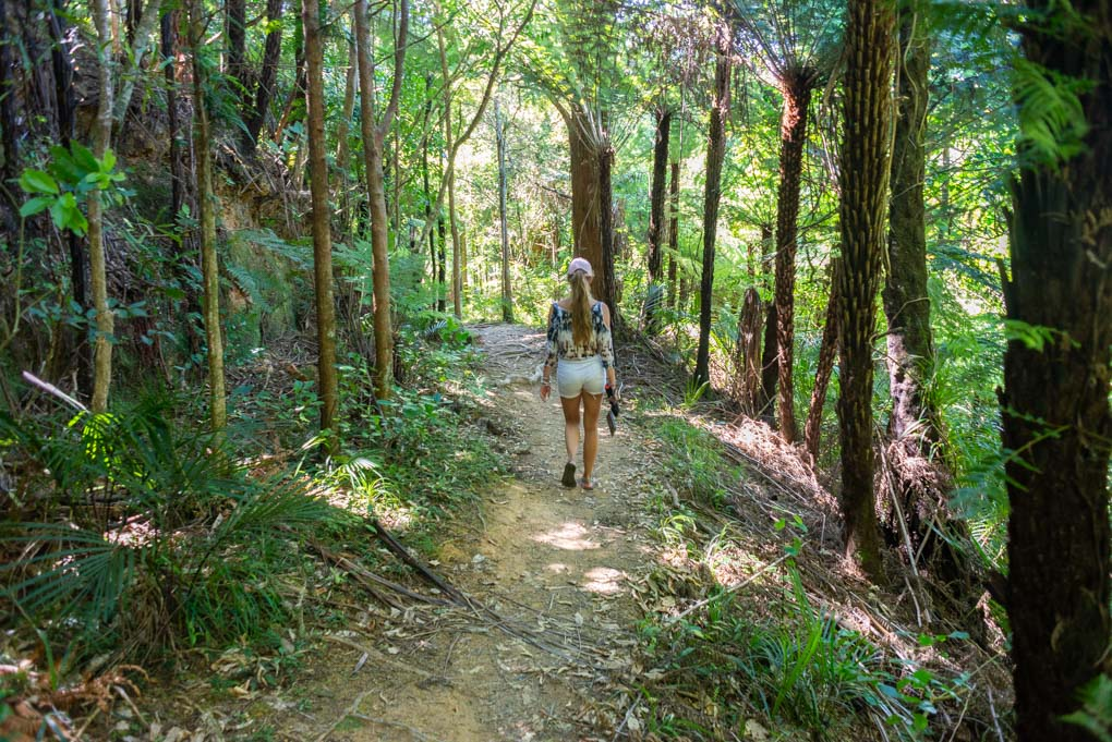 Bailey walks along the Waipu Caves Track