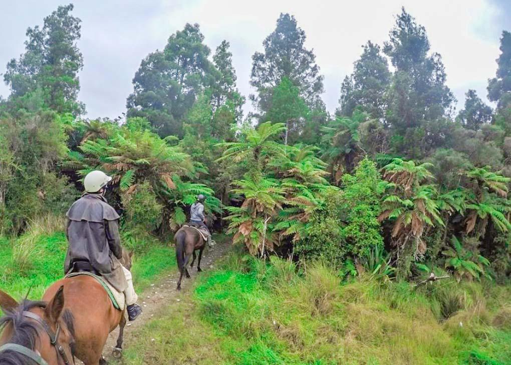 Horse riding in Punakaiki