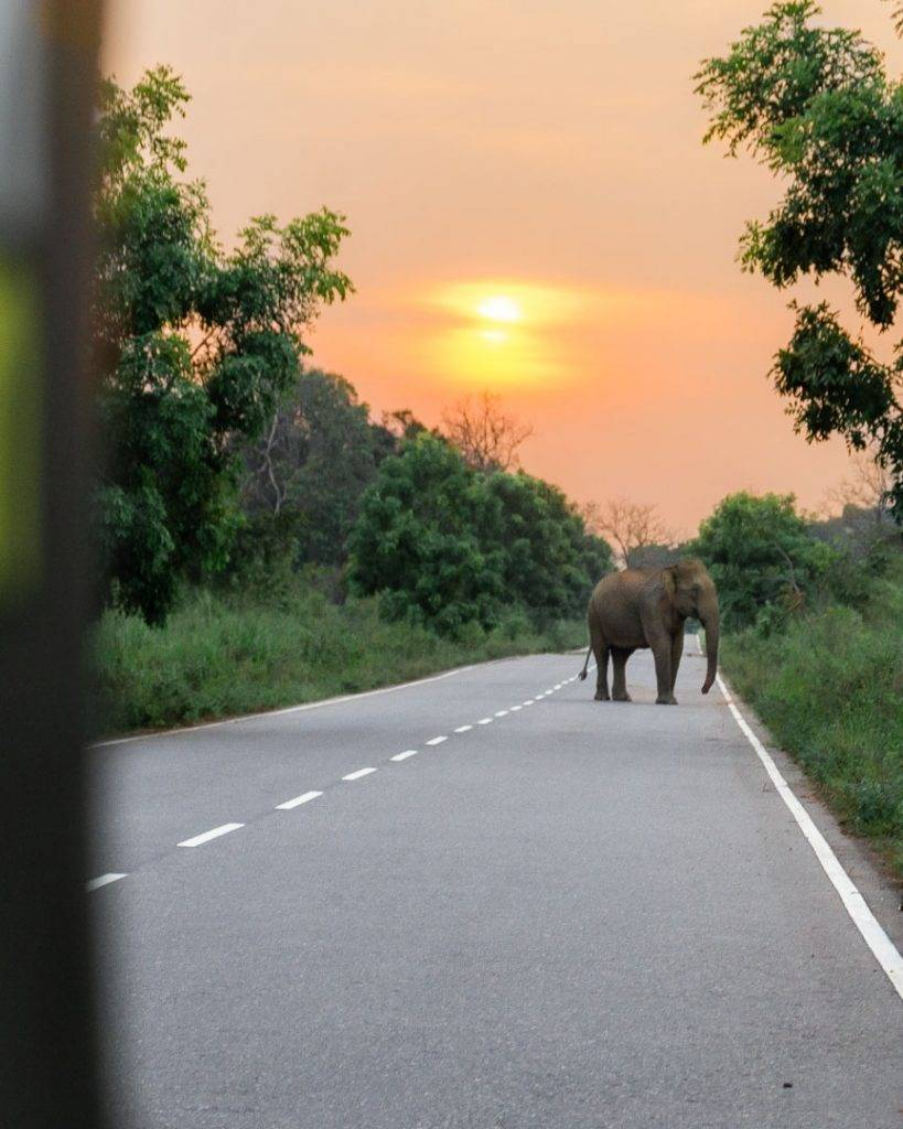 Overnight safari in Sri Lanka