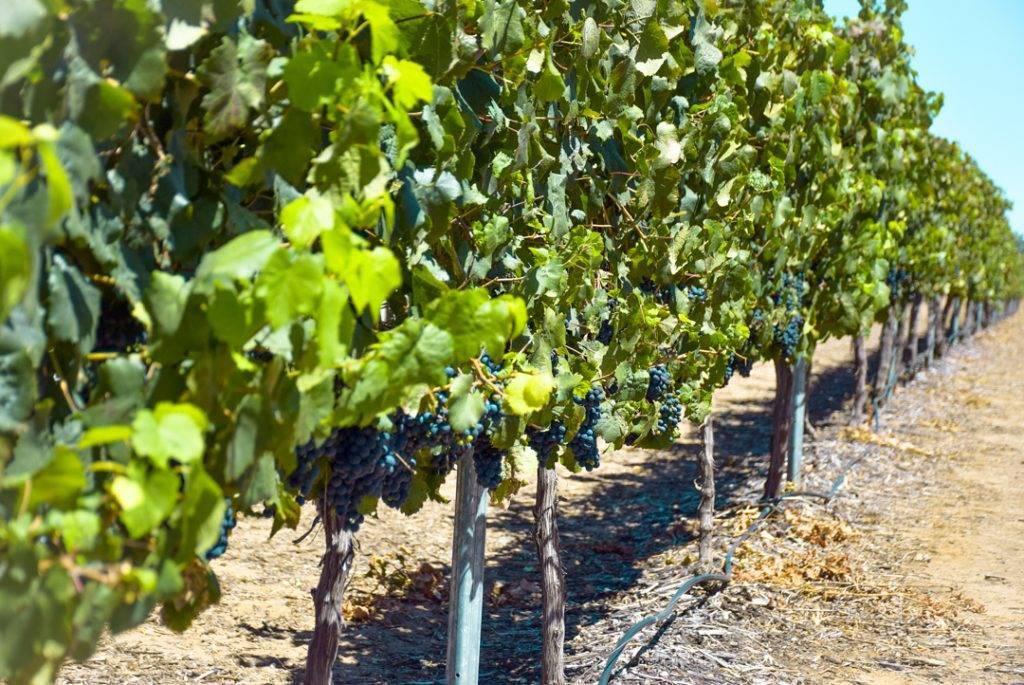 Waiheke Island's Wineries