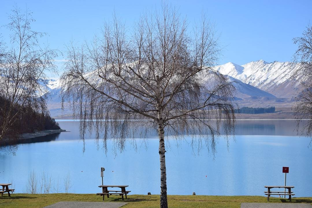lake tekapo is the best stop over on a new zealand road trip