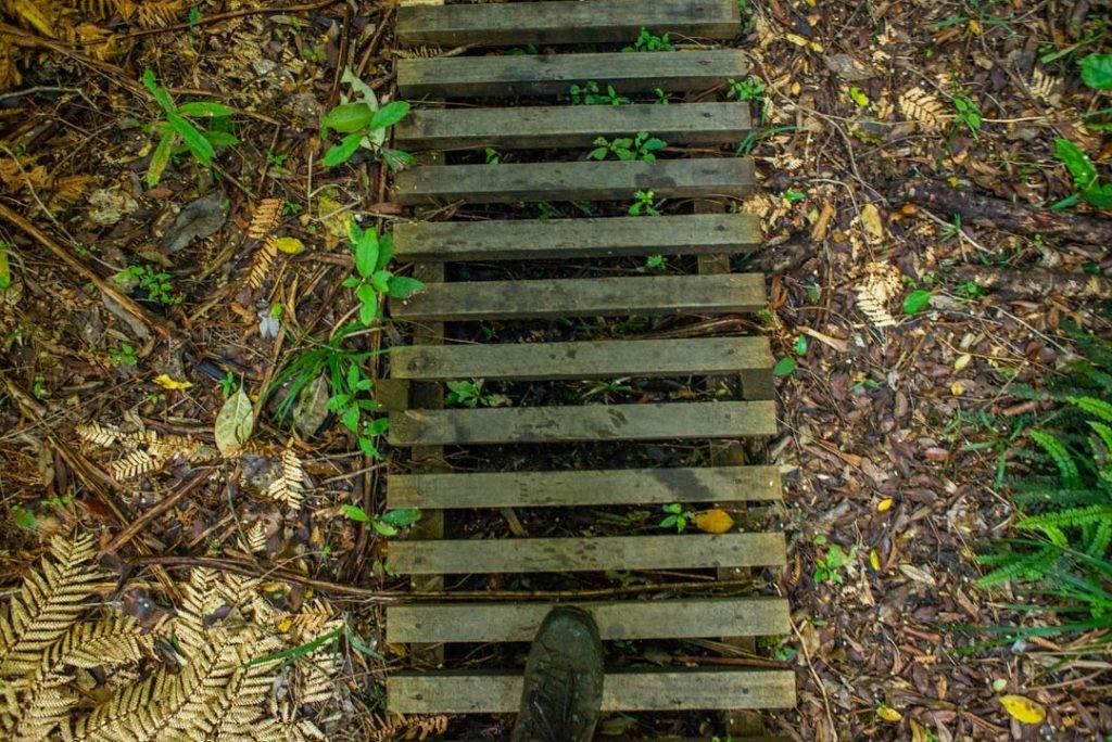 The boardwalk to the Pouakai Hut