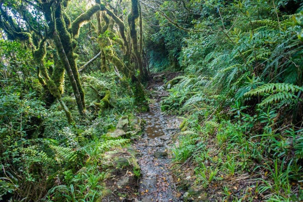 The muddy trail to the Pouakai Hut