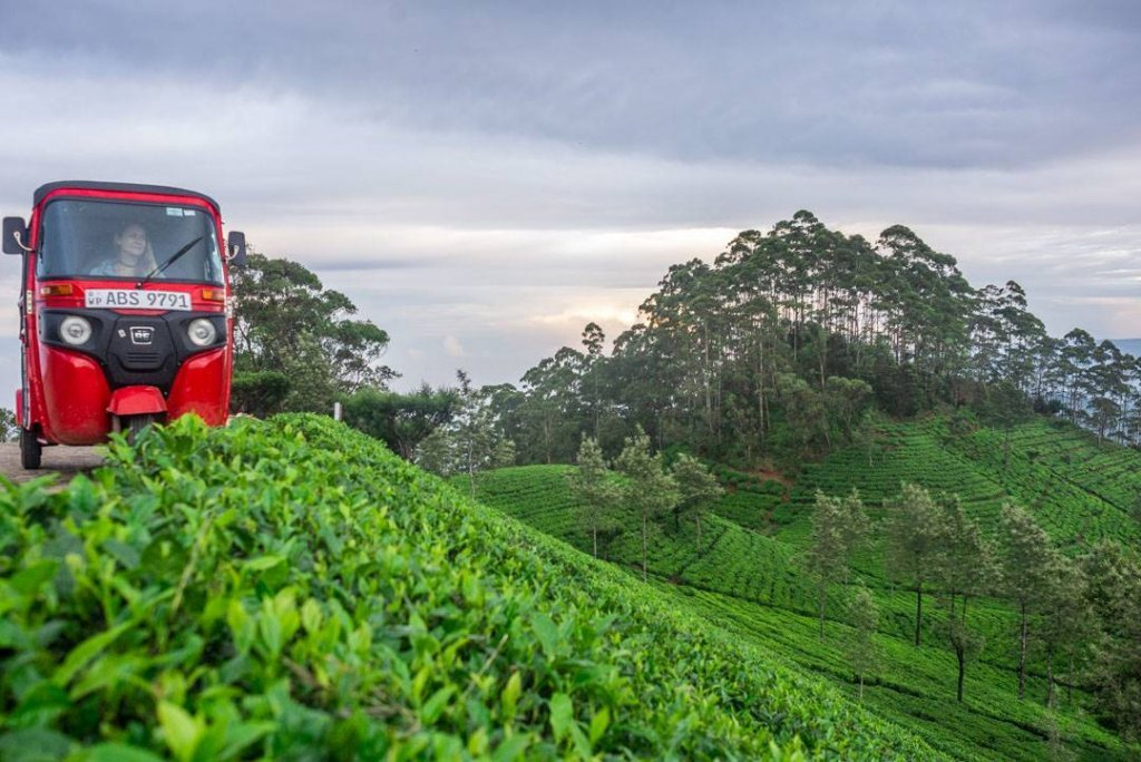 Exploring the tea fields in Haputale Sri Lanka in our tuk tuk