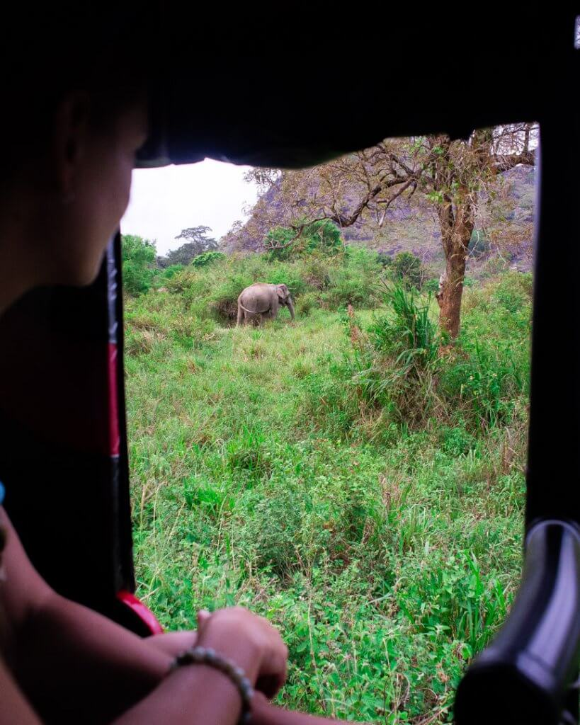 watching an elephant from our tuk tuk!