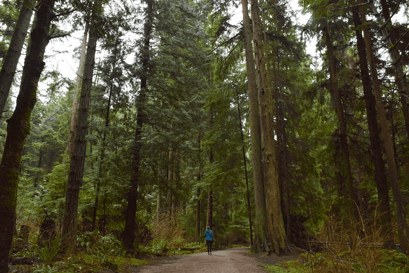 A lady walks through Stanley Park in Vancouver