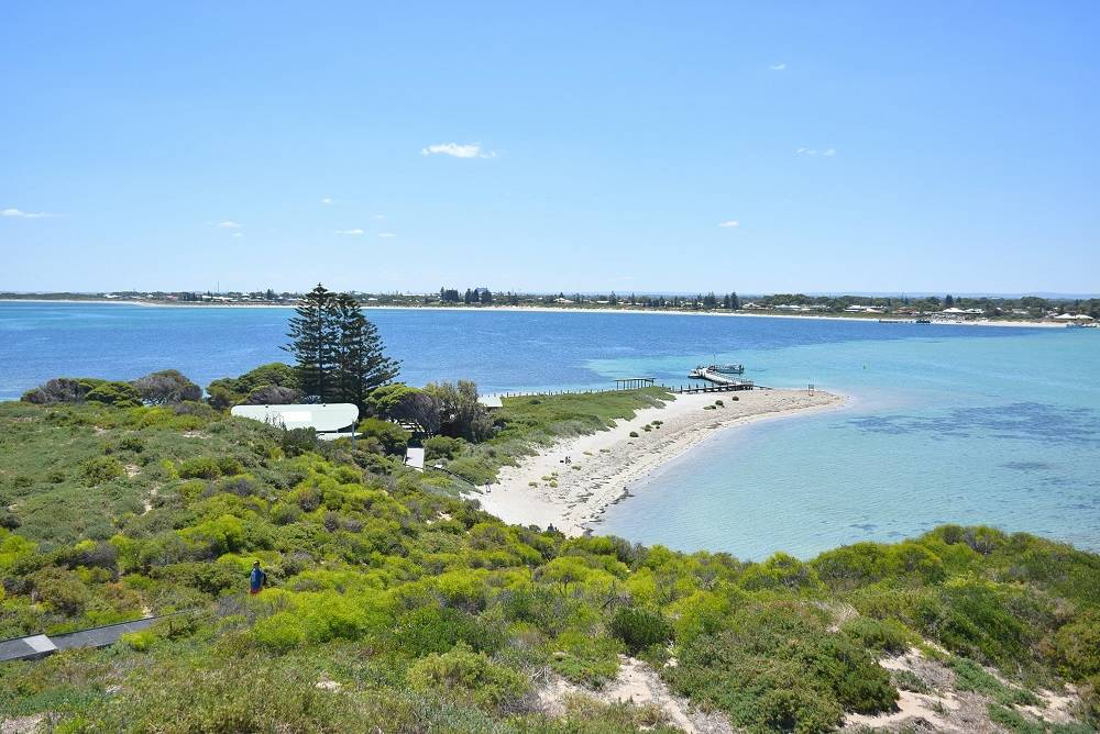 Things to do in Perth - Penguin Island
