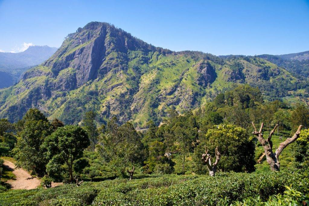 landscape with tea plantations and The Ella Rock