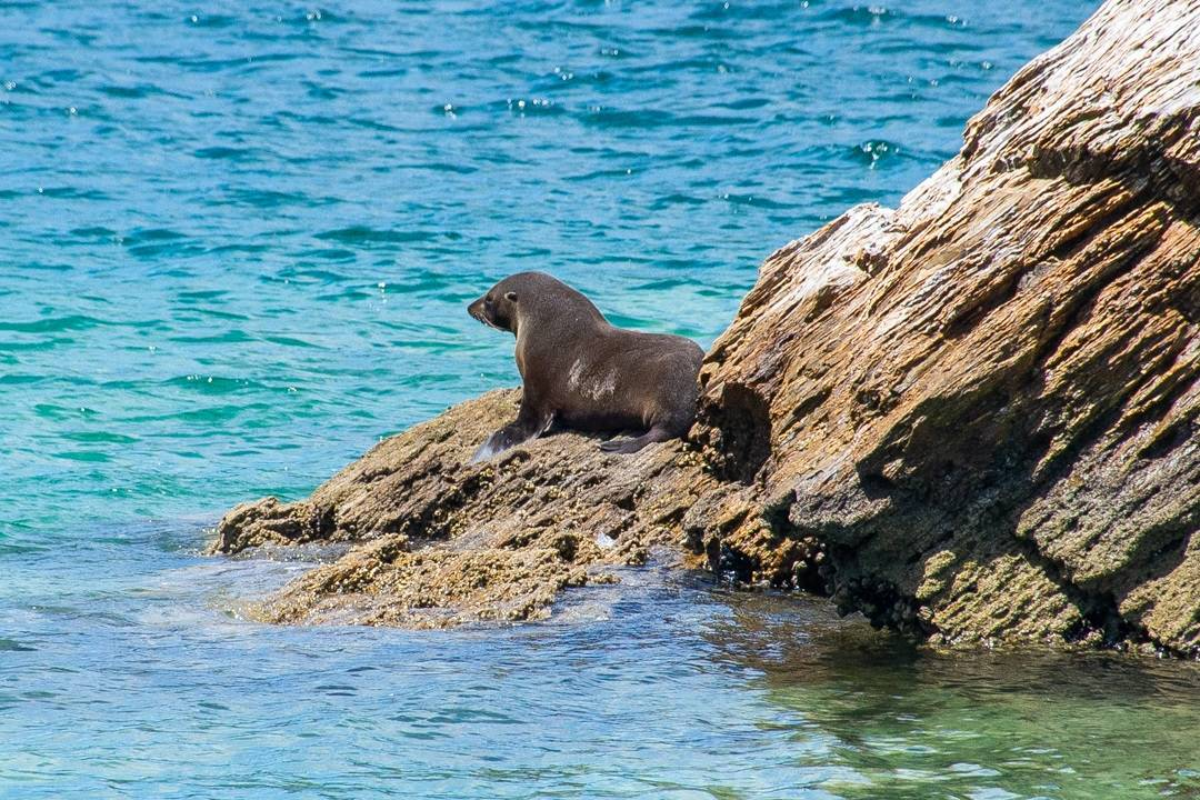 seal on a Marlborough sounds cruise