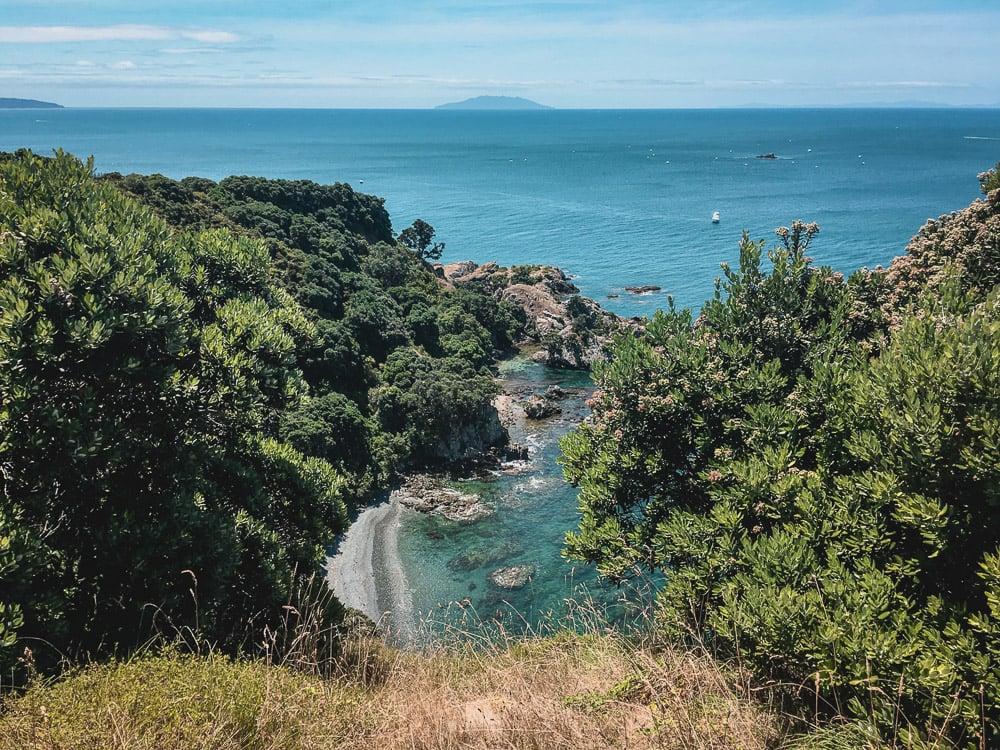 Tiritiri Matangi Island wildlife sanctuary