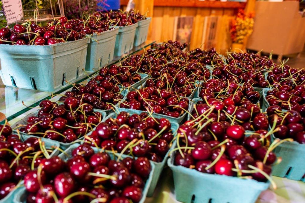 Fresh Cherry's at Davison Orchards in Vernon, BC
